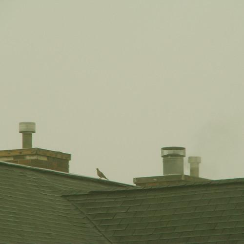 rooftop mist