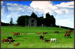 HORSE HEAVEN (Edward Dullard Photography. Kilkenny, Ireland.) Tags: kilkenny ireland horses landscape photographic irland emeraldisle ierland galope dullard edwarddullard goldstaraward societyedward