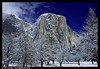 Snow-covered trees and West face of El Capitan. Yosemite National Park, California, USA.