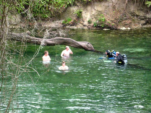 Swimming with divers at Blue Springs State Park
