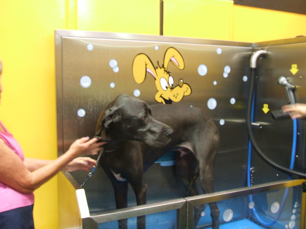 The worlds best photos of pet and yourself flickr hive mind great dane in k9000 dog wash tmcpetvending tags dog pet self do it solutioingenieria Choice Image