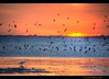 sunset at virginia key with shore birds at low tide (asawaa) Tags: sunset orange color bird topf25 water birds topv111 bravo florida miami horizon topc50 shore chapeau lowtide egret hdr virginiakey hobiebeach mywinners abigfave anawesomeshot diamondclassphotographer flickrdiamond