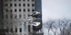 gotta build my nest (letgoandletsgo) Tags: street people delete10 standing delete9 walking delete5 delete2 flying movement nikon downtown sitting delete6 delete7 seagull delete8 delete3 delete delete4 save save2 hinf d40x letgoandletsgo
