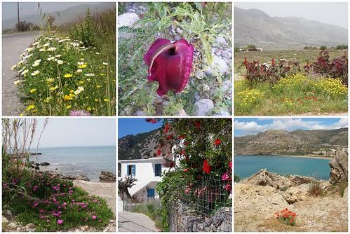 Crete Springtime Flowers