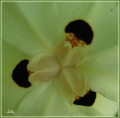The heart of the matter..... (sallysue007) Tags: white macro nature soe takeabow supershot flowerotica masterphotos abigfave shieldofexcellence anawesomeshot crystalaward diamondclassphotographer flickrdiamond fickrdiamond macroaward heartsaward macromarvels theperfectphotographer brillainteyejewell