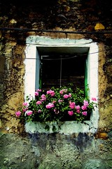 Window (Digital Owl) Tags: old pink flowers window concrete painted 50v5f mge digitalowl digiowl
