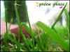fili d'erba (Martolda) Tags: summer italy color detail verde green primavera photoshop butterfly spring italia estate erba marta dettagli colori perugia umbria fili greengrass paticolari filiderba pratoverde martolda