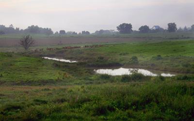 Morn-Fields
