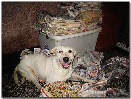 2008-07-13-「尋求幫助」公告{求救}高雄市關懷流浪動物協會受虐犬們即將被迫搬家!懇請隨手幫忙轉PO~謝謝您!
