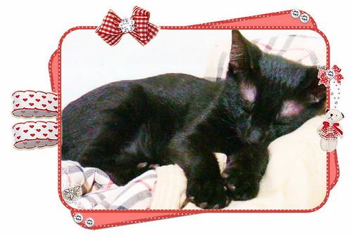 taku-sleeping