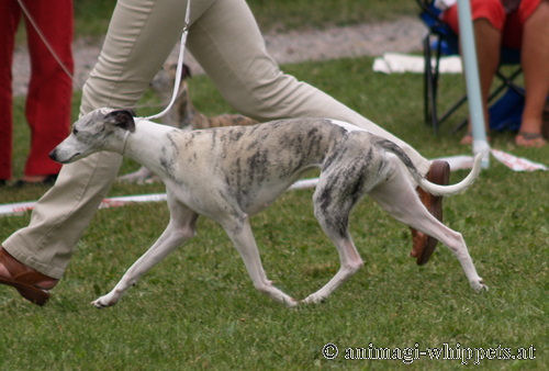 Dogcastles Be Nice2