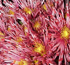 (countyworker) Tags: detail details mundane mundanedetails pinkflowers mundanedetail