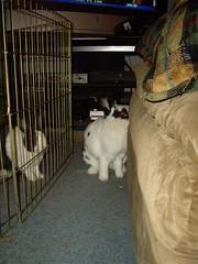 Julius visiting Jessica Bunny