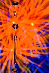Jewels (picturesbysteve) Tags: macro water rebel xt drops fluid rebelxt waterdrops liquid highspeedphotography eosdigitalrebelxt liquidmacro ashotadayorso fabcap picturesbysteve fireworkscanvasprint
