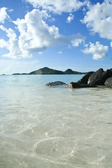 Cristal clear water of the Caribbean Sea (Alex.MacDonald) Tags: holiday slr digital canon honeymoon kitlens carribean resort antigua caribbean 1855mm dslr canonefs1855mm wi westindies antiguabarbuda canonlens canoneos350dslr canonefs cocoshotel antiguabarduda