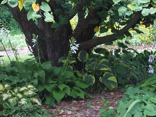 under the redbud tree