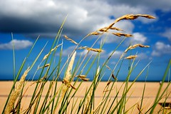 We're close (ethanea) Tags: life summer sky plant macro beach nature floral field weather closeup contrast outside photography daylight high blurry sand focus scenery warm colours exterior dof close view earth background space horizon explorer wide scenic deep scene surface daily outoffocus line sharp depthoffield size frame definition backwards environment daytime balance subject summertime normandie distance length limited lifesize normandy stillness increase dreamscape closer linear ratio quietness focalpoint precise focal landings sharpest foregrounds ethanea wasterham narrowdepthoffields damienditoro