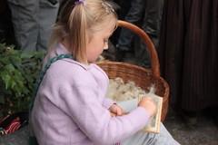 Saueklipp dagen 2008