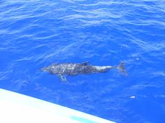 Dolphins - DSCF2155