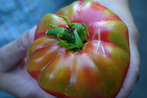 Heirloom tomato fresh from the garden
