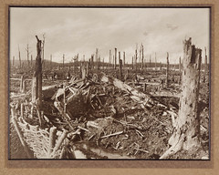 Chateau Wood near Ypres