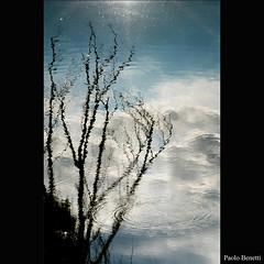 anelli nell'acqua (paolo.benetti) Tags: parco alberi lago nikon italia nuvole nuvola cielo ferrara albero ramo rami riflesso laghetto naturalmente d80 parcourbano elitephotography
