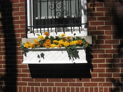 Autumn Mums, Philadelphia Housefrontn