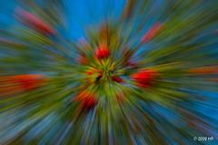 rowan tree (Mariusz Petelicki) Tags: sky abstract rowantree abstrakcja jarzbina canon400d mariuszpetelicki