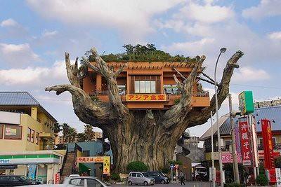 Restaurante encima de un árbol gajumaru class=