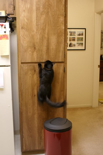 Durif goes up the cabinet