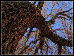 Orange! (Bonnie Almeida) Tags: blue orange tree florida treesubject