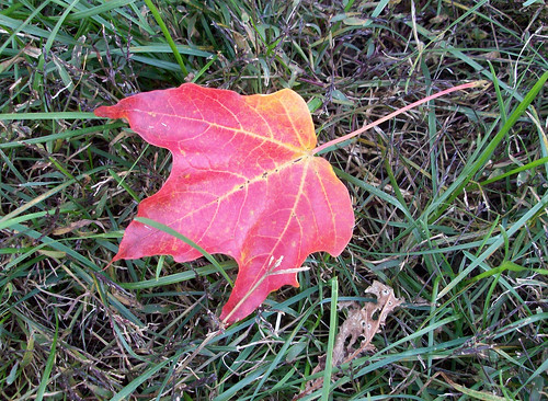 Foliage_101108d