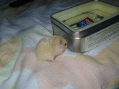 P1010002b (Danzel Ha) Tags: hamsters