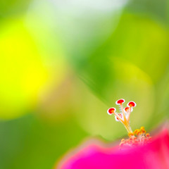 An Imago Thursday... (.I Travel East.) Tags: pink red flower macro green hit nikon october minimal hibiscus batonrouge bloom yelow nikkor vr lucio yellowgreen gumamela onexplore nikkor105mm charlottesgarden southlouisiana interestingness129 batonrougelouisiana pinkhibiscus nikkor105mmf28vr backyardshot nikond700 october2008 itraveleast pinkgumamela imagoismthursday animagothursday happyimagoismthursday exploredoctober162008 forourfriendvirginiaakaimago2007 enjoyyourvacationinmanilav 21stimagoismthursday