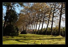 Fila de árboles (Jashir) Tags: canon 350d spain gijón asturias canoneos350d botánico asturies jardínbotánicoatlántico