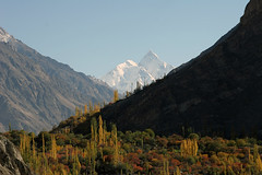 Autumn in Hunza 2008 266 (ghazighulamraza) Tags: colors gold perfect photographer view autum award panoramic mount valley colourful rakaposhi hunza nagar northernpakistan gilgit the snowpeaks landscapephotography northofpakistan a valleya golddragon northpakistan historyofpakistan mountainsofpakistan northerareasofpakistan hrefhttpwwwflickrcomgroups513921n24dragon pakistanilandscapephotographer ghazighulamraza pakistanilandscapre autumofhunza hunzahunzaautumautum