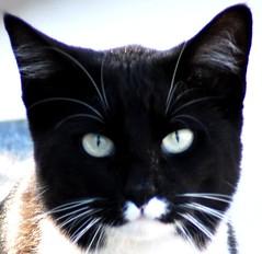 Happy Halloween! (Ruthie Kansas) Tags: pet black cat feline loveit wonderfulworld ilovemypics