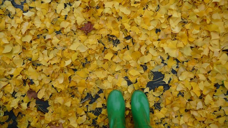 Yellow Gingko, Green Boots