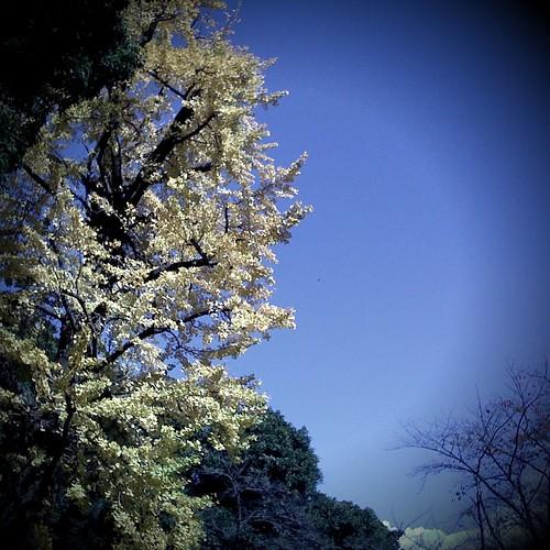 Blue Sky High