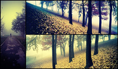 another day (kaneda99) Tags: tree film nature landscape torino triptych fuji silhouettes hasselblad explore velvia fourseasons fujifilm ginkgobiloba topf150 topf100 turin xpan kaneda analogic hasselbladxpan trittico tripticos kaneda99 tx1 parcodelvalentino 3000v120f alessandropautasso wwwimnotabrandcom flickrsfav100
