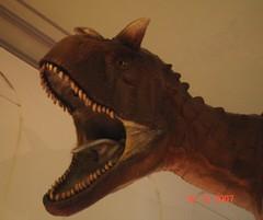 cabeza de carnotauro