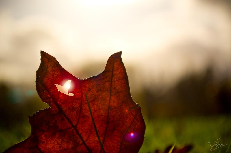 Fall-ing