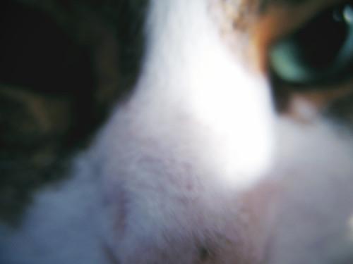 Intense Cat Is Intense:  December 1, 2008