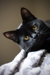 Domestic-kitty (vyxle) Tags: portrait black cute cat kitten sweet kitty carwash cwd cwd992