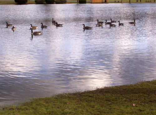 at least the geese are having fun