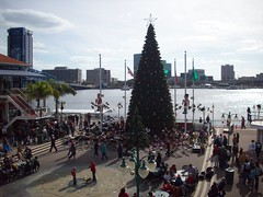 Tuba Christmas at Jacksonville Landing (mmellander) Tags:
