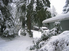 It doesn't show signs of stopping! (hopeisalot) Tags: our house wintersolstice winterinwashington snowinbothell winterinthepacificnorthwest snowinthepacificnorthwest snowinwashinton