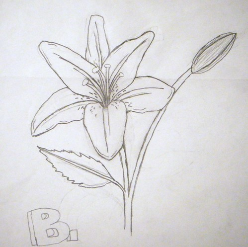 Lily Song Tattoo Design by Denise A  Wells by    Denise A  Wells   Lily Flower Drawings In Pencil