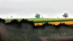 Morgennebel (eagle1effi) Tags: sun sunrise canon germany favoriten landscape deutschland landscapes cool colorful flickr bestof photos kunst surreal selection powershot fotos paysage edition picturesque landschaft sonne sonnenaufgang tuebingen paysages picnik erwin sx1 auswahl beste landschaften tbingen damncool tubingen masterclass wrttemberg badenwuerttemberg selektion tubinga digitalgraffiti bridgecamera effinger artexpression lieblingsbilder regionstuttgart digitalretouched eagle1effi ishotcc byeagle1effi naturemasterclass ae1fave byeagle1effi yourbestoftoday canonsx1is canonpowershotsx1is effiart ae1faves masterclass djangos natutemasterclass canonsx1ispowershot dibenga stadttbingen effiartkunstcopyrightartisteagle1effi effiartgermany effiarteagle1effi beautifulcityoftubingengermany beautifulcityoftbingengermany tagesbeste dibeng tubingue
