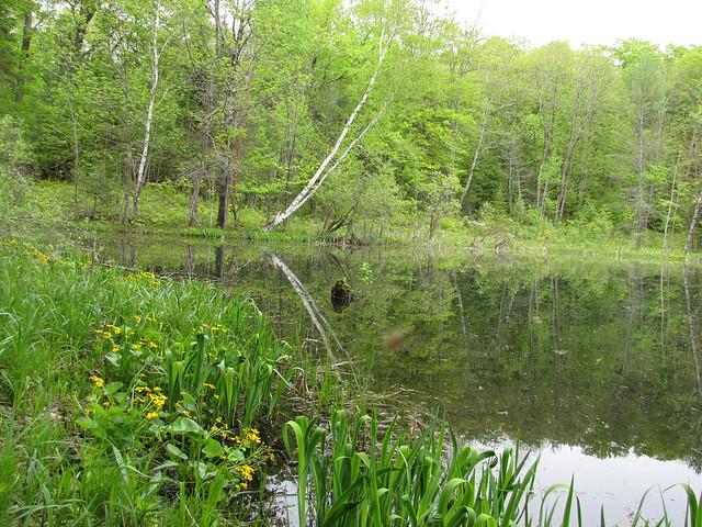Cabin May 2011-12